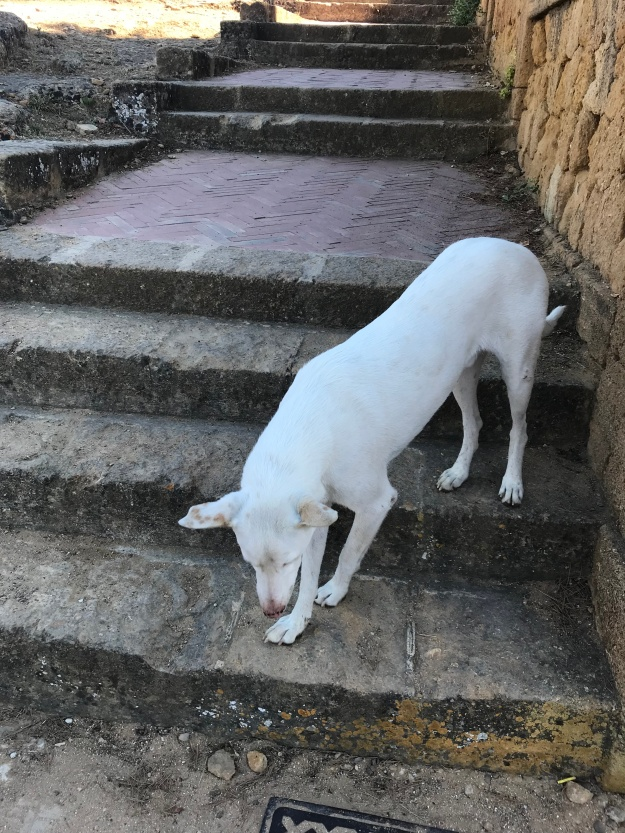 My lil Greek Temple pup friend... he wanted to come home with me!